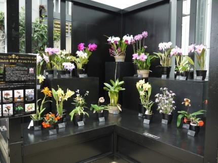 お宝ラン展 奇跡の星の植物館 淡路夢舞台温室