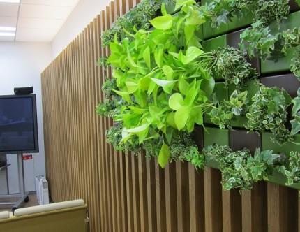 壁面緑化 店舗デザイン設計