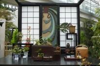 江戸の将軍、花物語 ラン展2020 奇跡の星の植物館
